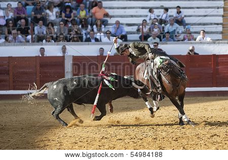 Spanish bullfighter on horseback Diego Ventura bullfighting on horseback with the sword of death to
