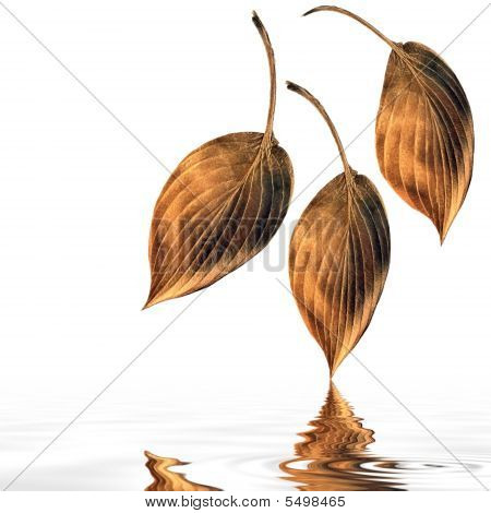 Abstract Copper Hosta Leaves