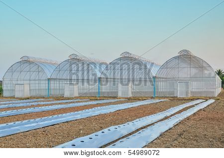 Empty Greenhouse And Farm Field