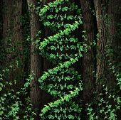 image of modification  - DNA nature symbol as a dark tree forest growing a green vine in the shape of a genetic double helix icon as a metaphor for biological technology and the science of biology in the natural world - JPG