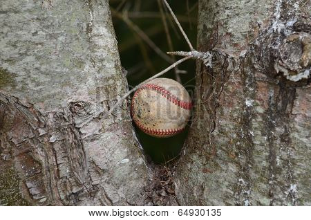 Baseball stuck in a tree
