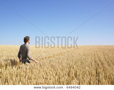 Man Walking In Wheat Field