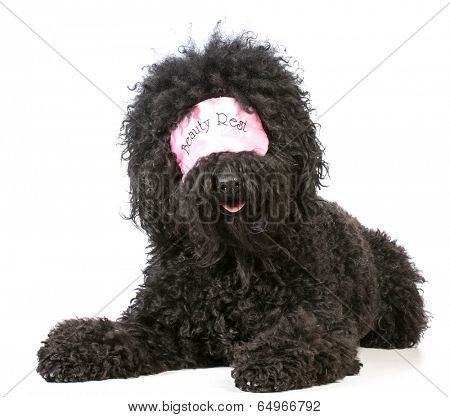 beauty sleep - barbet dog wearing sleep mask