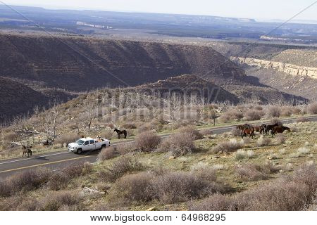 Wild Horses in National Park