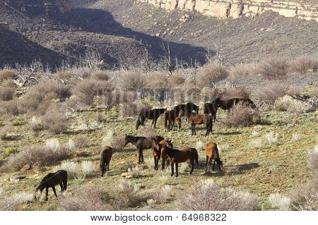 Wild Horses in Western Canyon