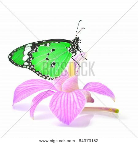 Butterfly On Orchid Flower