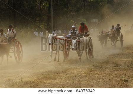 Nagaon Maharashtra India, April 30:Traditional Bullock cart race