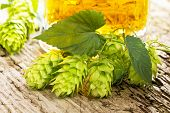 stock photo of hop-plant  - still life with hop cones and beer - JPG