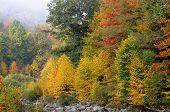 picture of virginia  - Colorful trees along creek in West Virginia - JPG