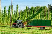 stock photo of hopper  - Harvesting Hop with a tractor taken in Austria - JPG