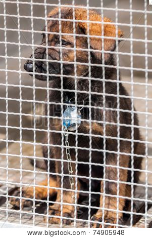 A sitting puppy behind grating with a dog collar on a chain