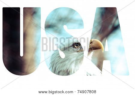 Word Usa With Bald Eagle.