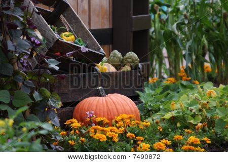 Pumpkin In A Vegetable Garden