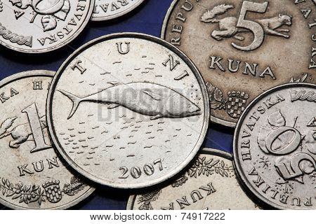 Coins of Croatia. Atlantic bluefin tuna (Olea Thunnus thynnus) depicted in the Croatian two kuna coin.