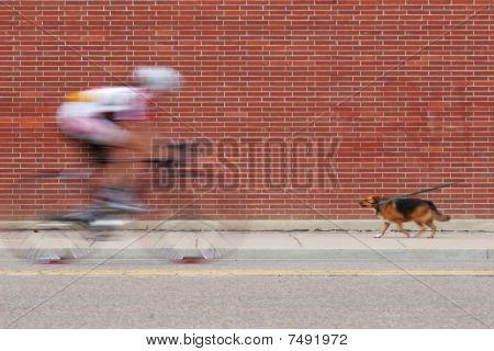 Cyclist And Dog