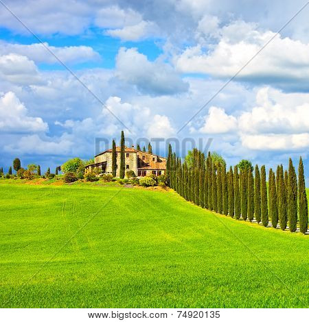 Tuscany, Farmland, Cypress Trees Row And Field. Siena, Val D Orcia