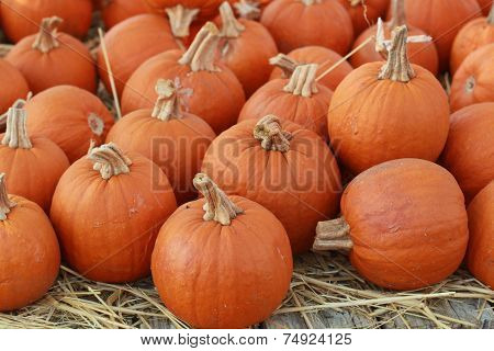 a bunch of small pie pumpkins