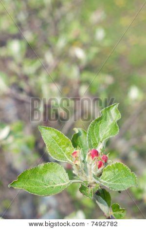 Spring tree bud Blossom
