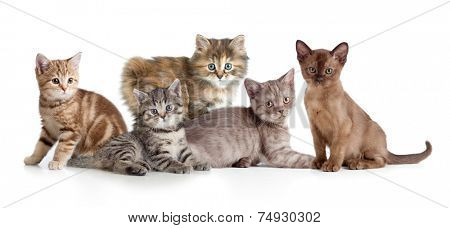 A group of different kitten