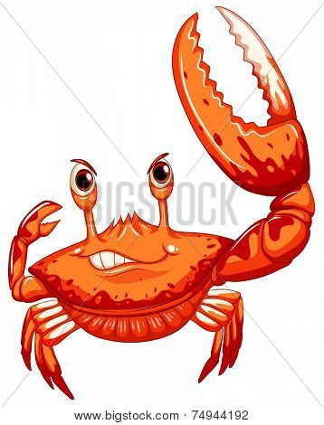 illustration of a close up crab