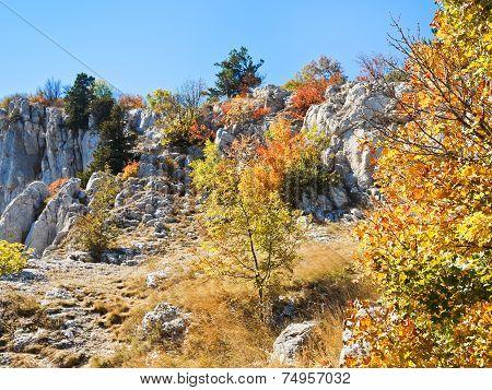 Yellow Trees On Slope Ai-petri Mountain In Autumn