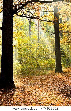 Sun Lit Glade In Autumn Forest