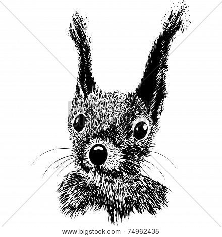 Squirrel Head Vector Animal Illustration For T-shirt
