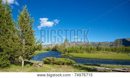 Pine Tree Beside River