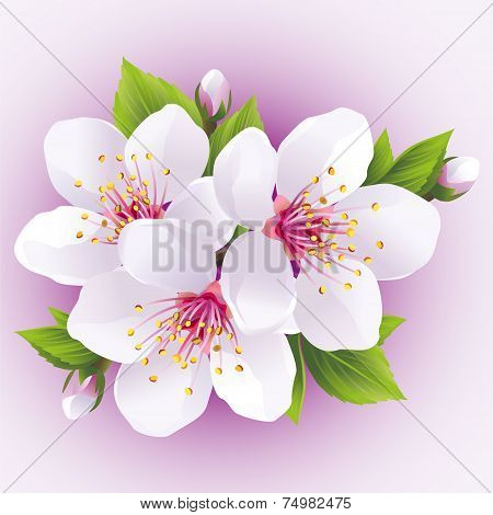 Blossoming Sakura Branch- Japanese Cherry Tree