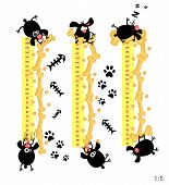 image of measuring height  - Baby height measure with funny dogs  - JPG