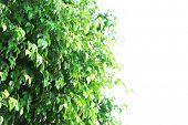 pic of tree trim  - Green tree at park - JPG