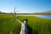 picture of marshlands  - Fallen dead tree lies in the grass of marshland - JPG