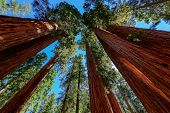 stock photo of three kings  - Sequoia National Park is a national park in the southern Sierra Nevada - JPG