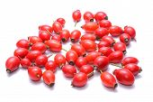 stock photo of wild-brier  - Rosehips isolated on white background in studio - JPG