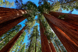 stock photo of nationalism  - Sequoia National Park is a national park in the southern Sierra Nevada - JPG