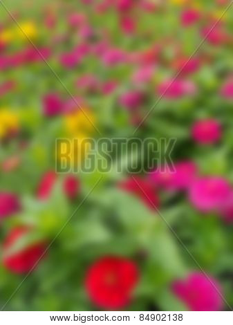 Blurred Of Colorful Flower
