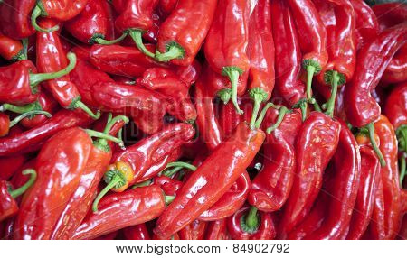 Organic red paprika peppers for sale