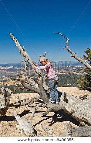 Climbing Bristlecone