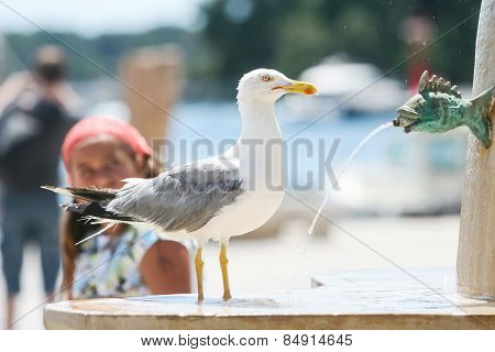 Seagull On Water Fountain In City