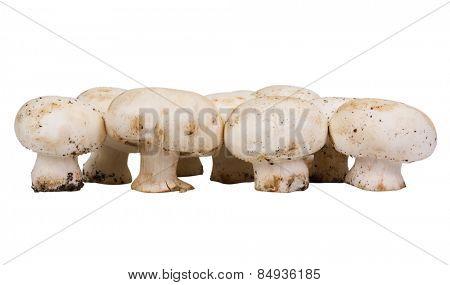 Close-up of edible mushrooms