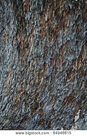 Close-up of tree bark, Mysore, Karnataka, India