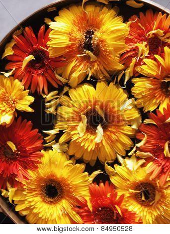 Close-up of Daisy flowers in a bowl, Mysore, Karnataka, India