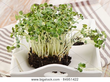 Cress In  A White Wooden Box.