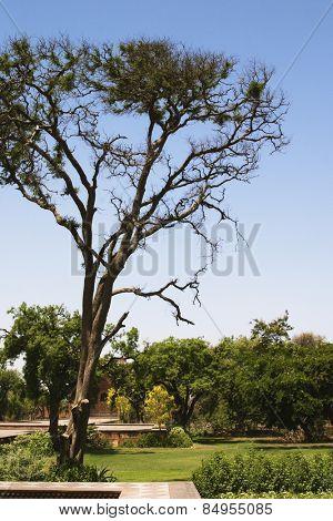 Garden area of a mausoleum, Tomb Of Akbar The Great, Sikandra, Agra, Uttar Pradesh, India