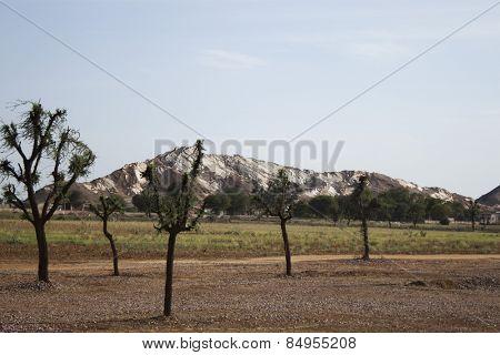 Tree with a mountain range, Ahmedabad, Gujarat, India