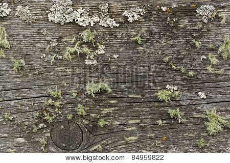 Wooden Board With Lichen