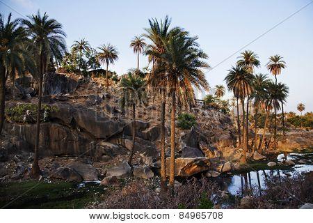 Palm trees with rock formations at Guru Shikhar, Arbuda Mountains, Mount Abu, Sirohi District, Rajasthan, India