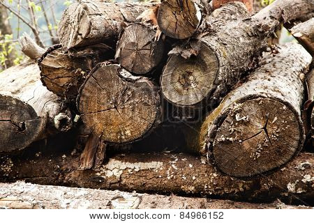 Stacks of logs in a forest, Manali, Himachal Pradesh, India