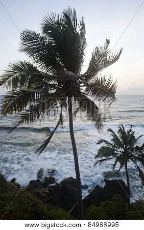 Palm trees on the beach, Varkala, Kerala, India, Asia