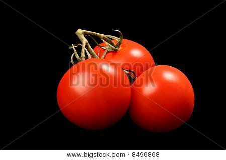 Three fresh ripe tomatoes with a green stem isolated on black